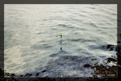 Dagmara Tomala [Kwiecień 18] - własne 013_Fotorgotowe