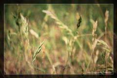 Dagmara Tomala [Kwiecień 18] - własne 024_Fotorgotowe