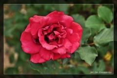Iza Czerwonka [Kwiecień 18] - własne 020_Fotorgotowe