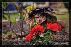Iza Czerwonka [Kwiecień 18] - własne 022_Fotorgotowe