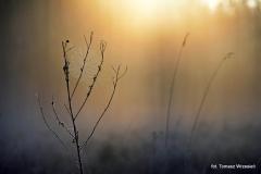 Przyroda - Krajobraz 032