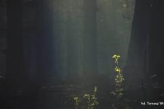 Przyroda - Krajobraz 046