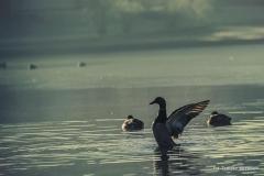 Jezioro Nowogardzkie [Styczeń 18] 149b