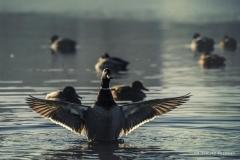 Jezioro Nowogardzkie [Styczeń 18] 169b