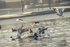 Jezioro Nowogardzkie [Styczeń 18] 189b