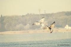 Jezioro Nowogardzkie [Styczeń 18] 228b
