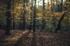 Wycieczki - Łosośnica [Październik 16] 001