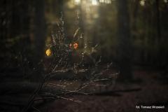 Wycieczki - Łosośnica [Październik 16] 009