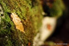 Wycieczki - Łosośnica [Październik 16] 010