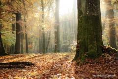 Wycieczki - Łosośnica [Październik 16] 012